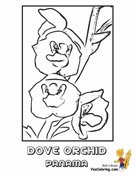 flower coloring pages orchid flower iris picture