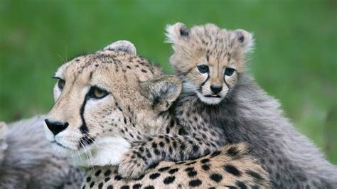 imagenes reino animal grandes madres del reino animal hogarmania