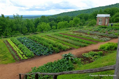 Garden Of Vegetables With Hatch About Monticello S Historic Gardens