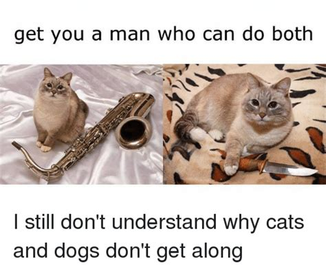 why don t cats and dogs get along 25 best memes about get you a who can do both get you a who can do
