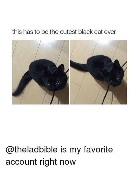 Funny Black Cat Memes - 25 best memes about black cat black cat memes