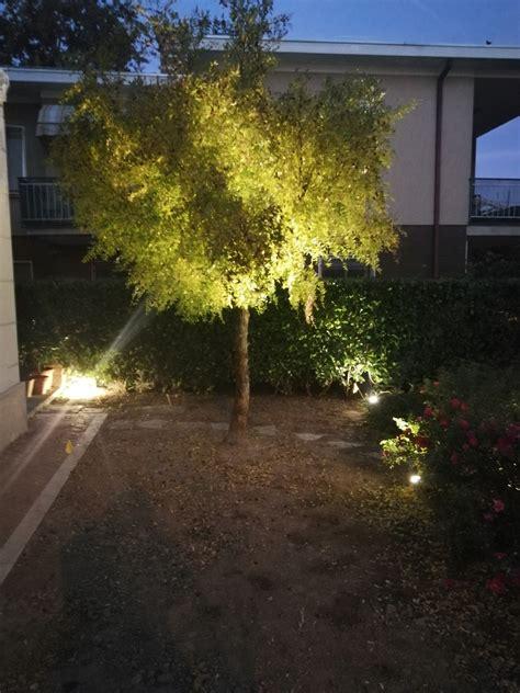 illuminazione alberi illuminazione per alberi da giardino consigli ed idee