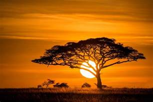 Tree Sun Savannah Sunset Nature Wallpapers   New HD Wallpapers