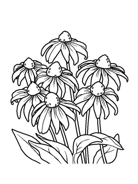 disegnare fiori disegnare fiore