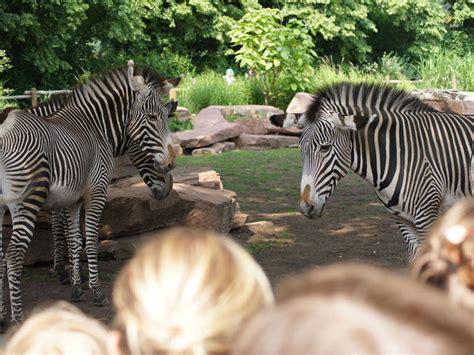 zoologischer garten läden freizeit touristische informationen 252 ber magdeburg