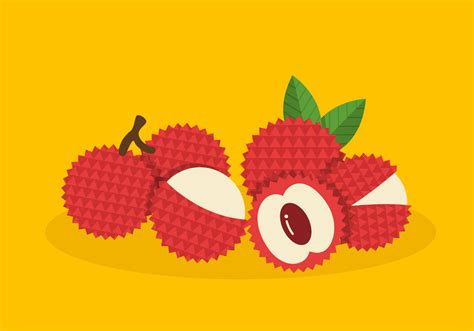 lychee fruit drawing lychee vector fruit free vector stock
