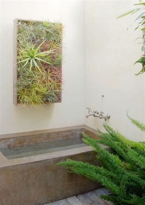 air plants bathroom air plants home make over pinterest