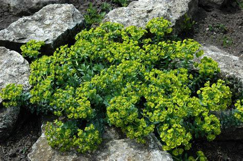 Garten Kaufen Auf Usedom by Pflanzen Kaufen Stauden Pflanzen Sortiment Gartenwelt