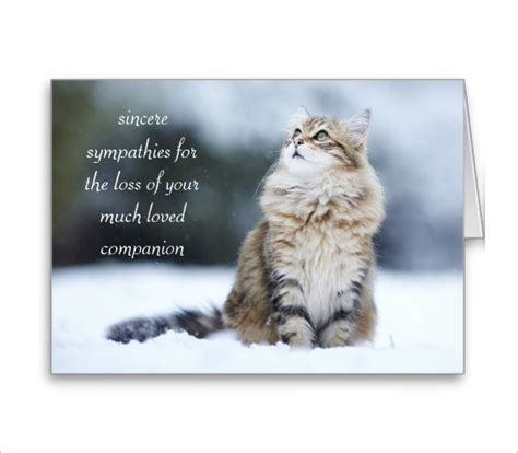 pet sympathy card template 10 sympathy card templates psd vector eps free