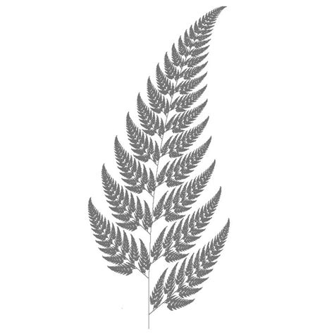 silver fern clipart clipground