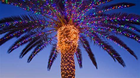palm tree christmas light net palm trees lights decoration