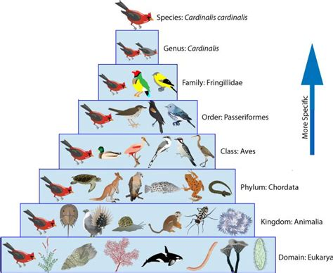 taxonomy search bio chem physio stuff biology animals and how to make