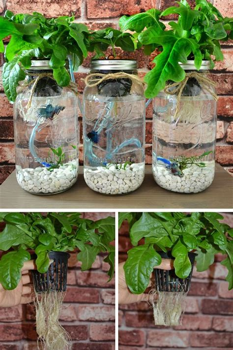 pruning  plant roots      small