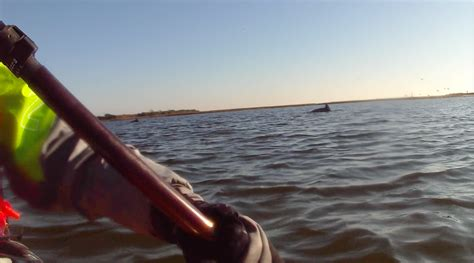 wildlife boat r near me kayak for safe passage kids paddle day 77 dolphins