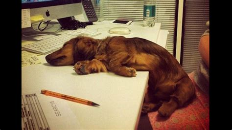 puppy sleeps all the time these dogs sleeping in has to be the next sensation