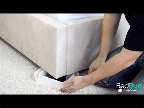 bed bug interceptor diy bed bug diy interceptors travel the world and experience vacations and holidays in