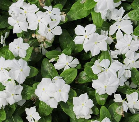 most common garden flowers 13 common flowers that are poisonous toxic flowers