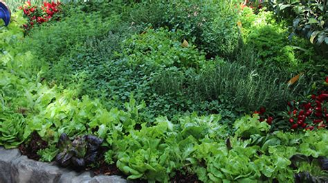 backyard herb garden garden design 6103 garden inspiration ideas
