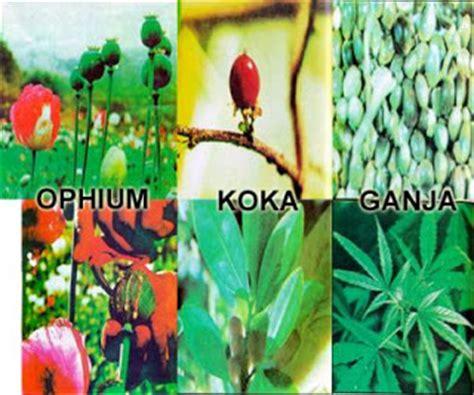 muhammad iqbal gambar jenis jenis narkoba