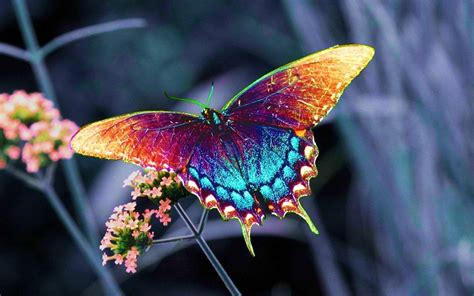 colorful butterfly colorful butterfies pictures photo shar箘ng s箘te