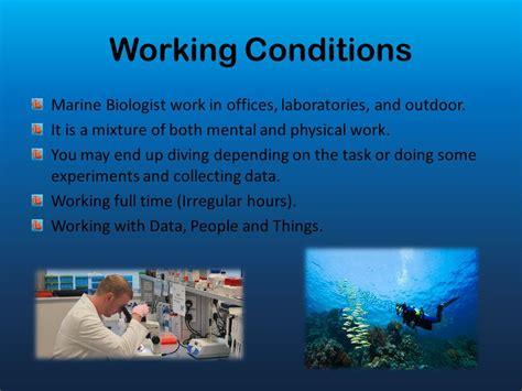 marine biologist description marine biologist animals marine world