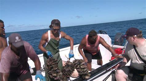 Culture De La by La Culture De Perle De Tahiti