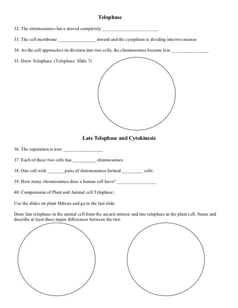 Mitosis Worksheet Middle School by Image Gallery Mitosis Activity