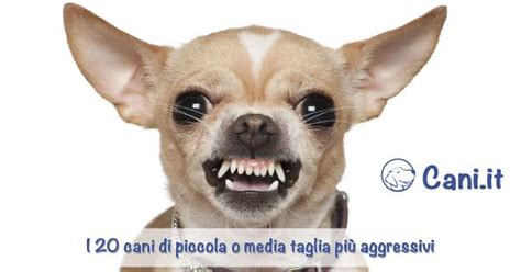 cani taglia media appartamento 20 cani di piccola o media taglia pi 249 aggressivi