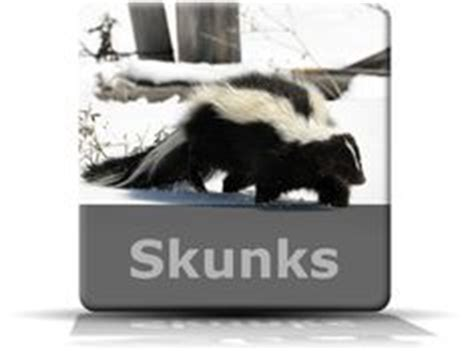 skunk repellent we re a bit of a problem
