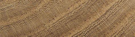Wood Wood Identification