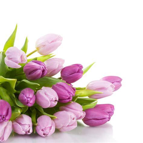 tulipano significato dei fiori i tulipani e il significato dei suoi vari colori
