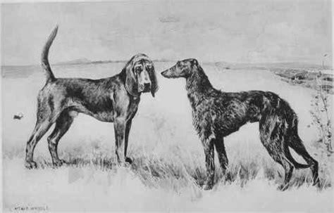 origin of dogs a history and description of the modern dogs of great britain and ireland sporting