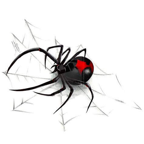 web pattern black widow black widow on spider web tattoo design