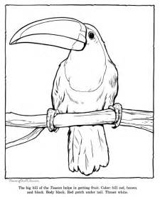 toucan coloring page toucan coloring picture sheets zoo animals 032