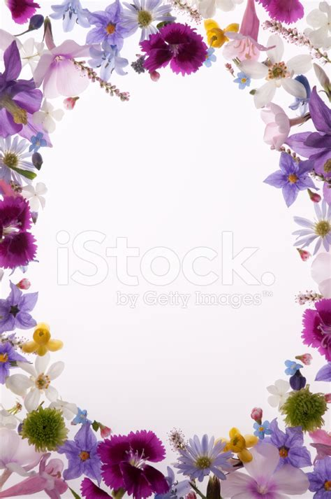light purple picture frame purple white yellow and pink flower border or
