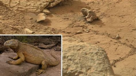imagenes extrañas captadas por el curiosity descubren una iguana en marte captada por el curiosity rt