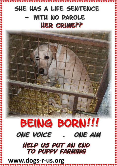 are puppy mills illegal stop puppy mills help save lives stop overpopulation neglect