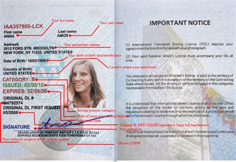 Singrindg Blog Driver License Translation Template