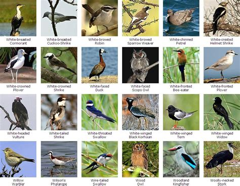 bird names a z driverlayer search engine