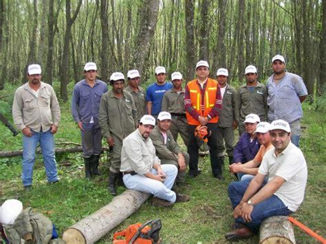 imágenes únicas de buenos días afoa multimedia galer 237 as la foresto industria en