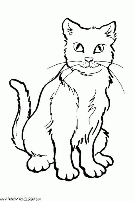 imagenes para colorear gato dibujos gatittos imagui