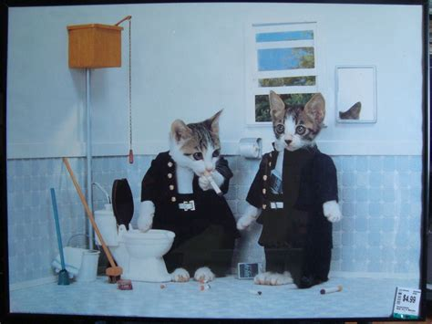 bathroom smoking funniest pictures and gif s funny cat pictures