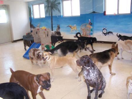 dog attack news dog daycare dog boarding and dog paws inn paradise pet resort pinellas park fl