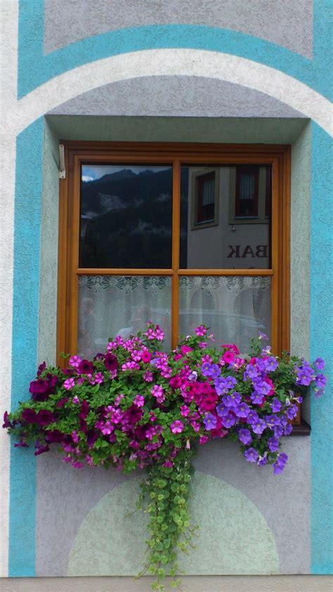 flower boxes windows best 25 window box flowers ideas on flower