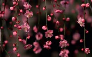 beautiful spring flowers beautiful spring flower wallpaper high definition high