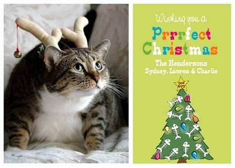 cat cards 5 ideas for a greeting card starring your cat