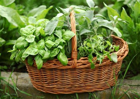 growing herbs diy raised herb garden home wizards