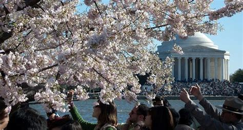 cuna washington dc national cherry blossom festival the graham hotel georgetown
