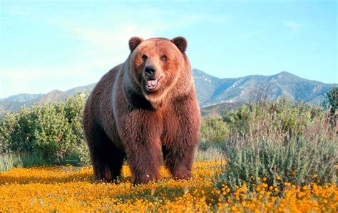 imagenes de osos wallpaper fondo escritorio oso