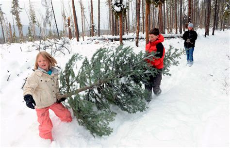 christmas tree farm sussex where to find a tree in morris sussex county